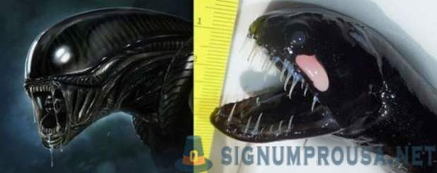 Strange creature caught oceanographers from the water