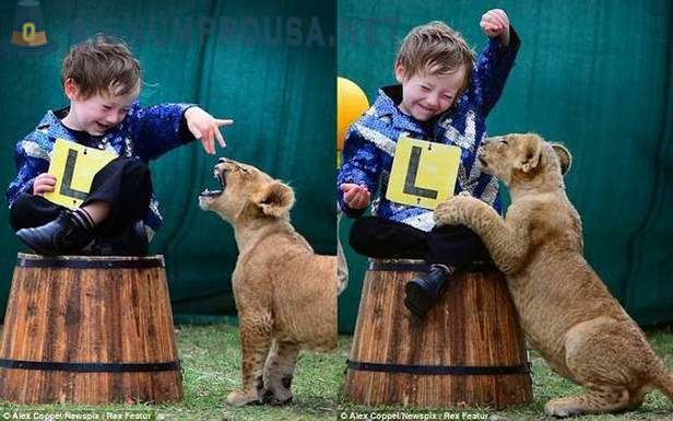 Little tamer and his big cat