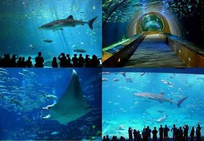 The biggest aquarium of the world