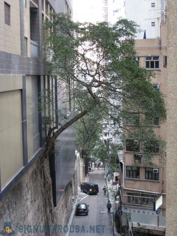 In Hong Kong, the trees grow out of the walls