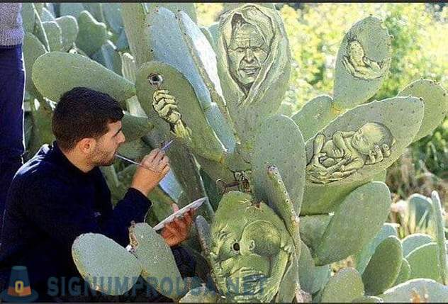 The Palestinian use of cactus instead of canvas for paintings
