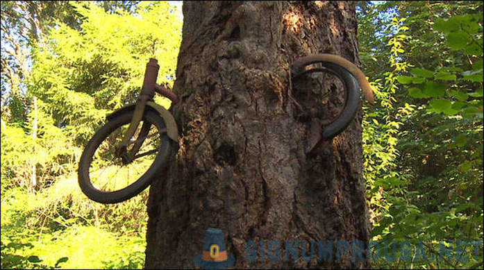 What really happened with the bike, grown into a tree?