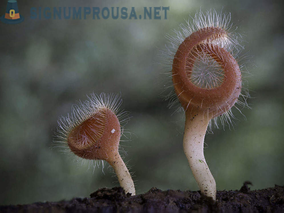 The most unusual and strange mushrooms in the world from an Australian photographer