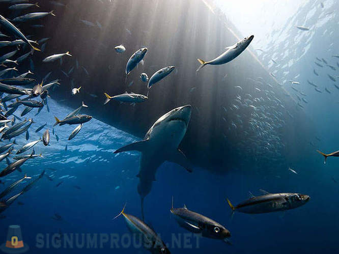 The best photos of National Geographic November 2014