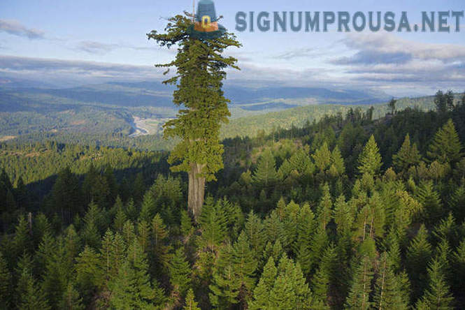 10 highest planet trees